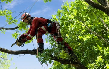 find trusted rated Sydney tree surgeons in Cheshire