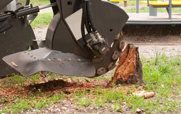 professional Sydney stump grinding services