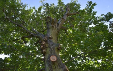 what is Sydney tree surgery?