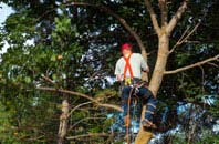 Sydney tree crown reduction services